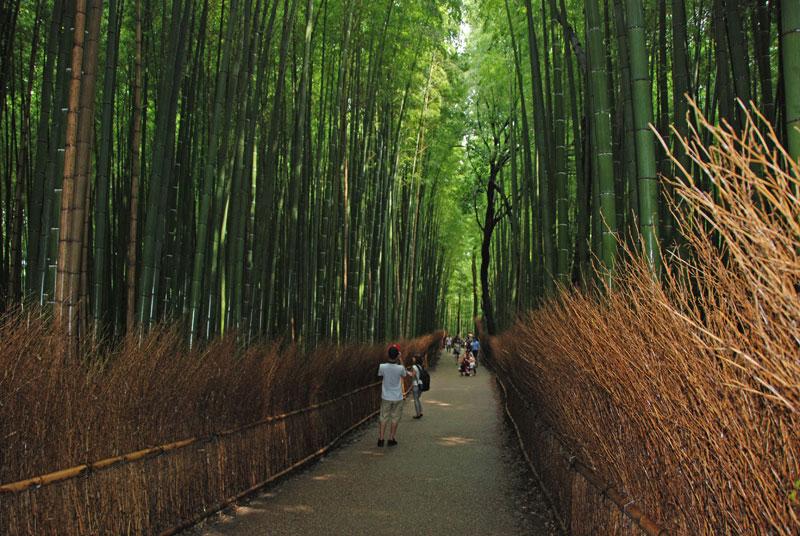 Uno scorcio del bosco di bambù