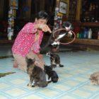 Il tempio dei gatti acrobati
