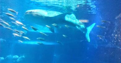 L'acquario di Osaka