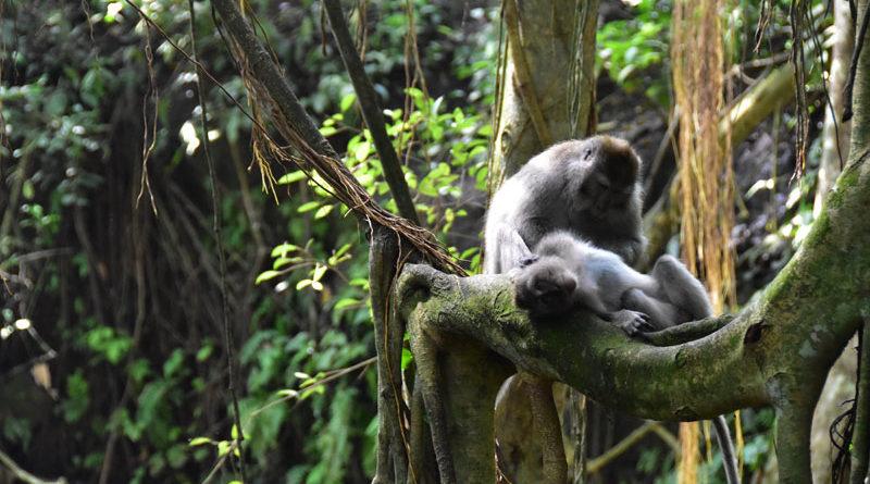 la foresta delle scimmie a Ubud