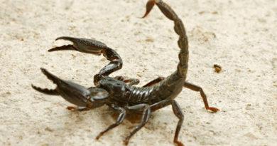 Scorpioni, scarafaggi