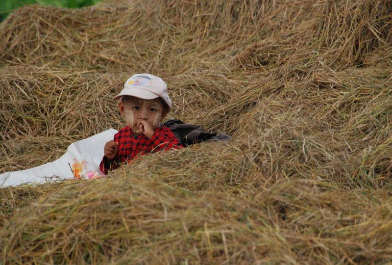 In mezzo alla paglia di riso