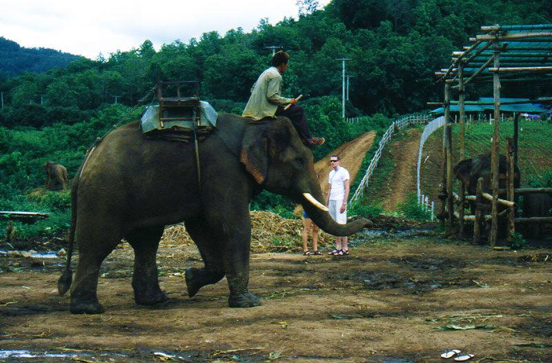 Trekking a dorso di elefante