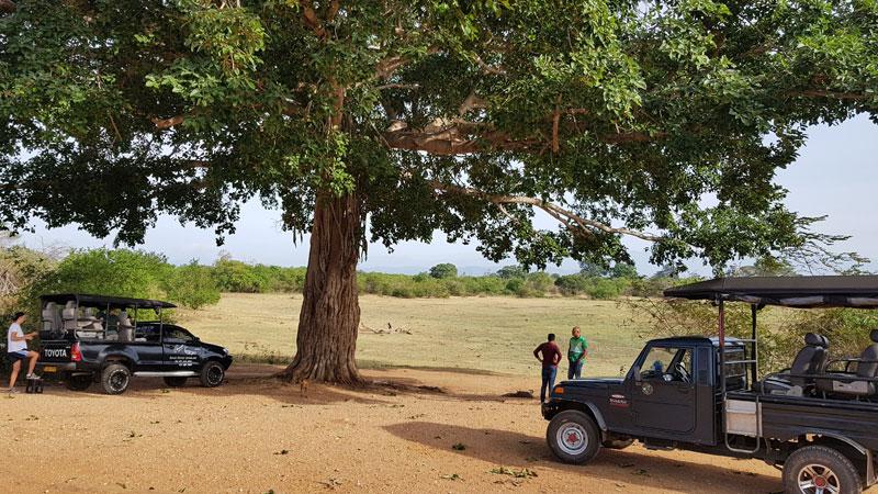 safari a Udawalawe