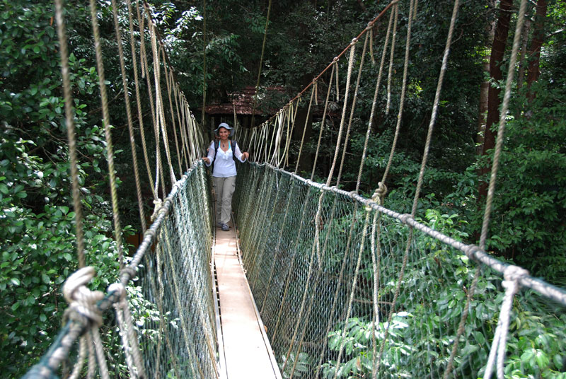 I canopi del Taman Negara