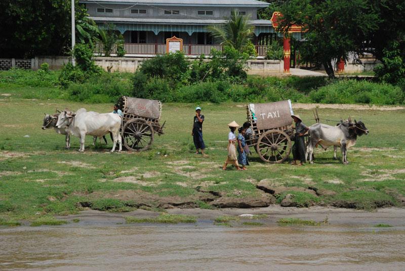Taxi a trazione bovina nei pressi dello stupa di Mingun