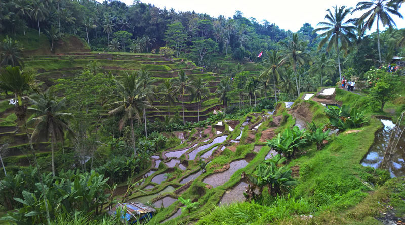 Le risaie di Bali