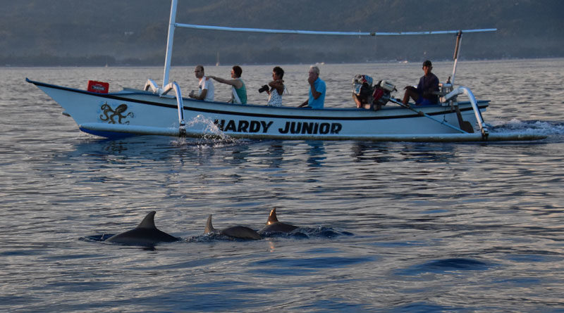 delfini di Lovina