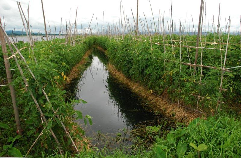 le coltivazioni del lago Inle