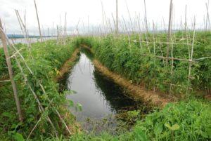 coltivazioni galleggianti del lago Inle