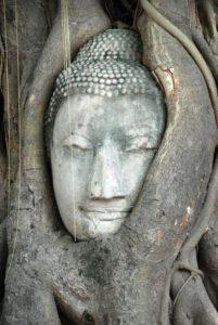 Il volto del Budda teneramente avvolto dalle radici del ficus