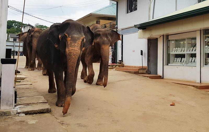 Il transito degli elefanti in direzione del fiume