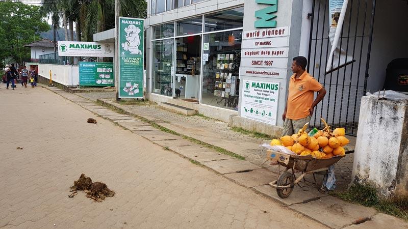Escrementi di elefante in mezzo alla strada e un negozio di prodotti derivati da essi