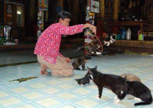 gatti saltanti