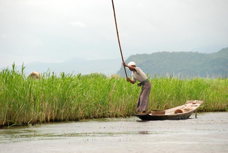 Un pescatore percuote l'acqua per spaventare i pesci