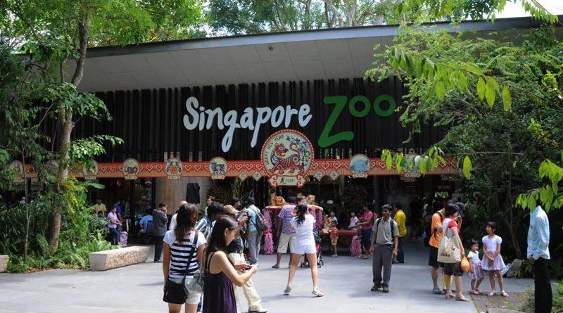 zoo di Singapore