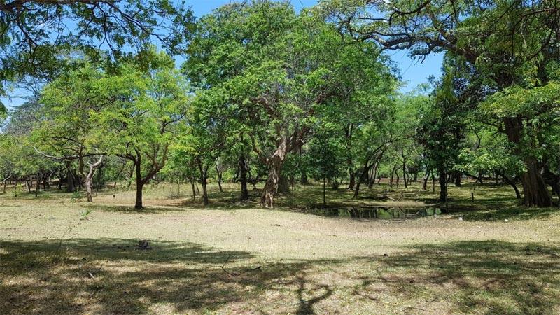 Foresta sempreverde secca nei dintorni di Polommaruwa