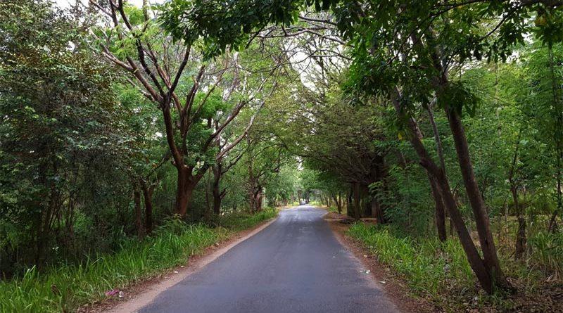 foresta secca