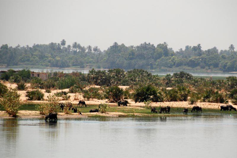 Il Nilo presso Assuan