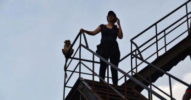 scimmie di Sigiriya