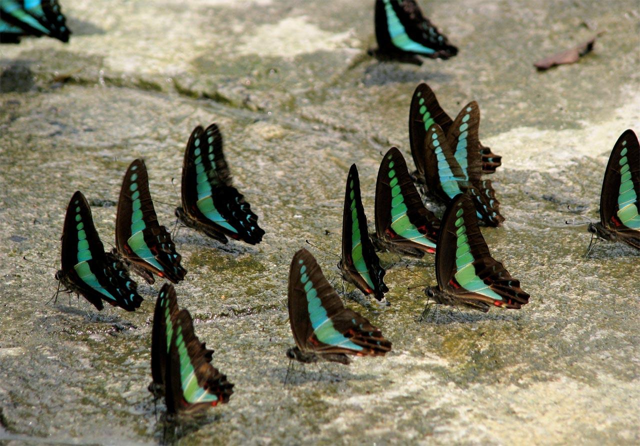 parco delle farfalle