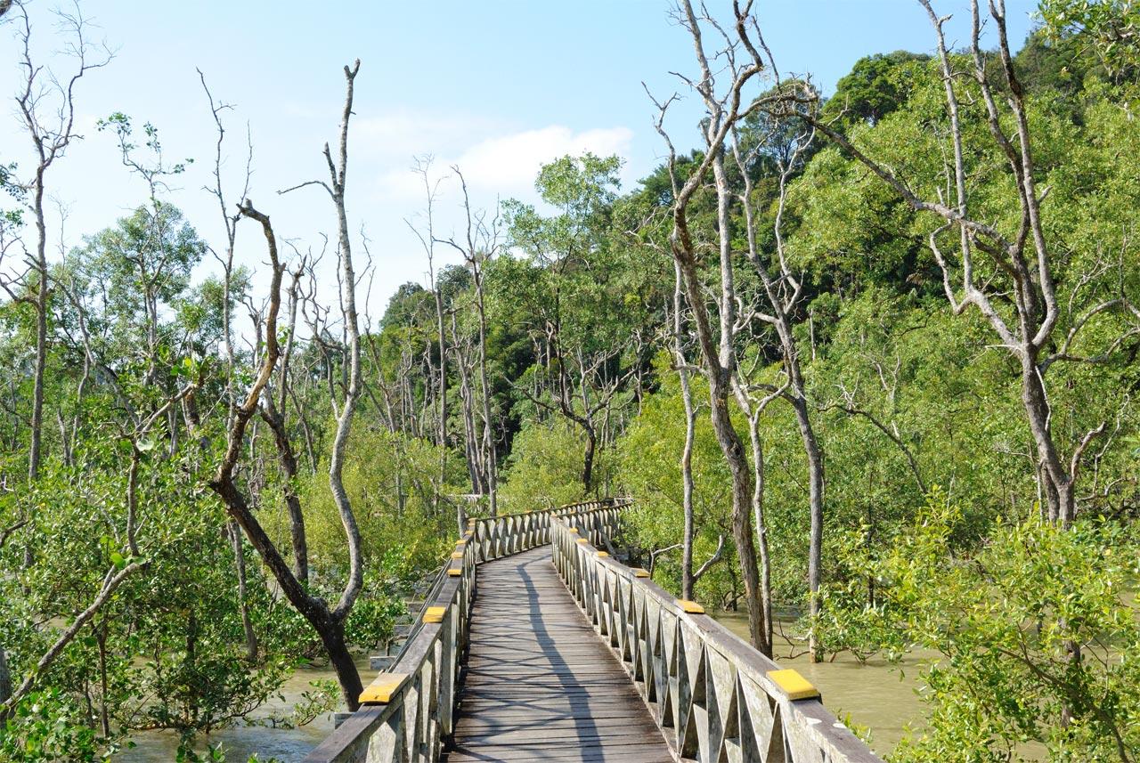 foresta mangrovie Bako